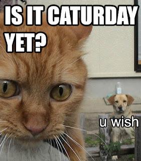http://2.bp.blogspot.com/_pL4B1Iyb890/SIpaXar0GHI/AAAAAAAAAKU/-NwtQPZMKiA/s320/5cat.caturday.funny.jpg
