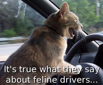 driving cats