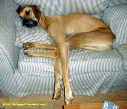 Edhe qeni ka nevoj ti clodh kembet