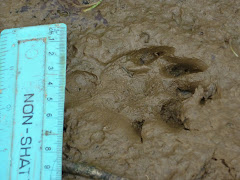 An otter footprint