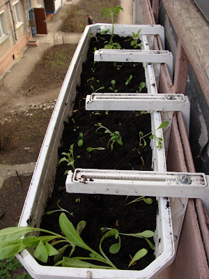 Огурчики и помидорчики на подоконнике