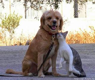 amicizia, sempre, per sempre