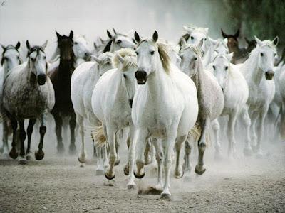 Konji - Page 3 Zivotinje-pozadine-za-desktop-0224-konji
