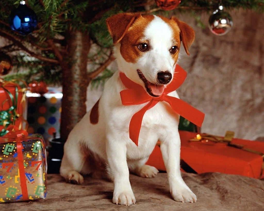 božić i novu godinu pozadina za desktop za download klikni na sliku