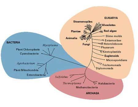 Resultado de imagen de En el sendero evolutivoi de la Vida, unos pudieron adaptarse y otros no