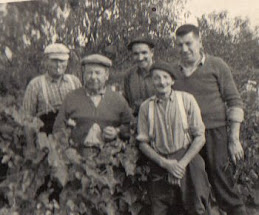Vendanges 1960