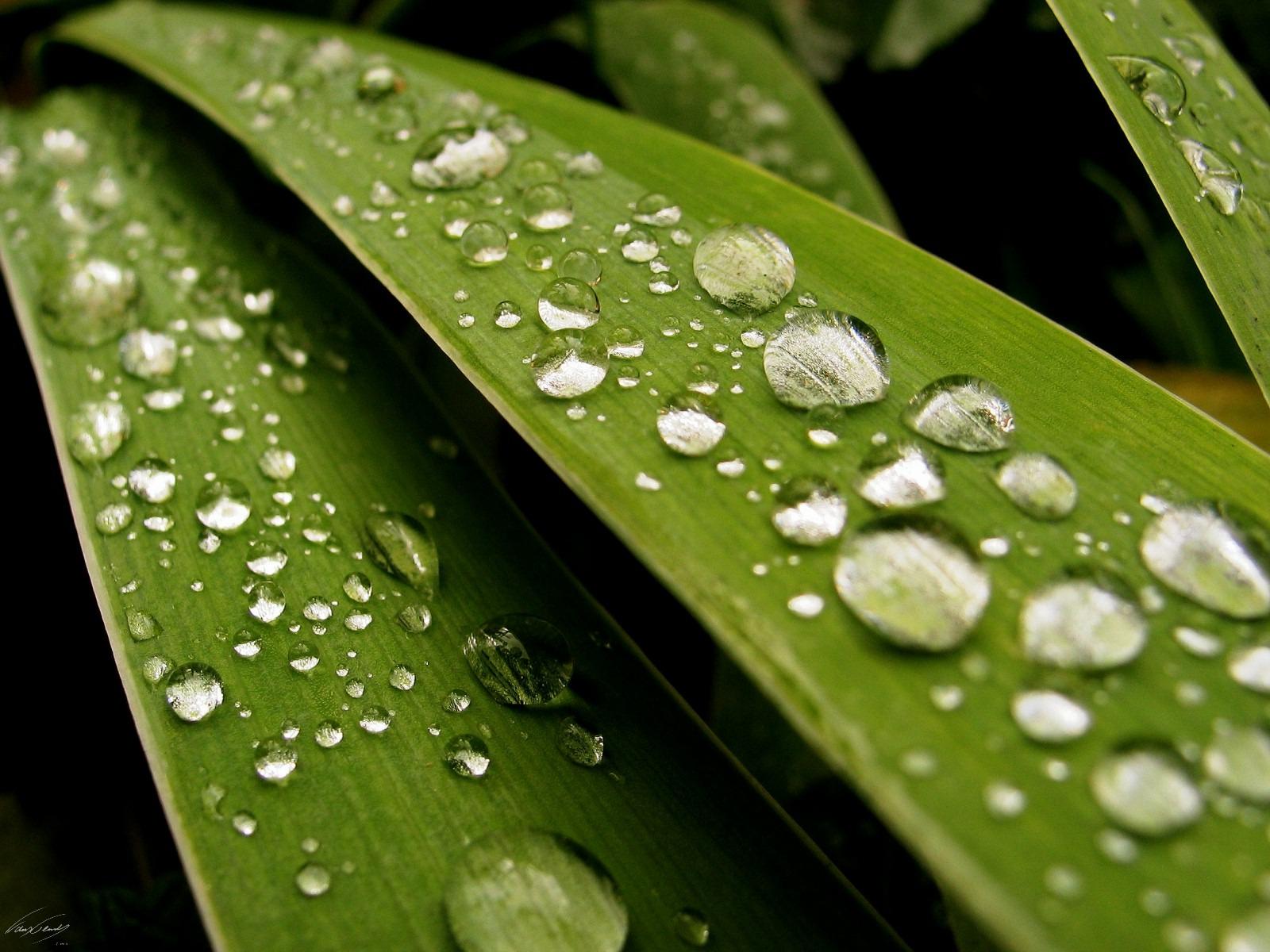 http://2.bp.blogspot.com/_pOW9LvKap60/TO0kvb38K-I/AAAAAAAAADw/5Or2TgpKHVU/s1600/rain_drops.jpg