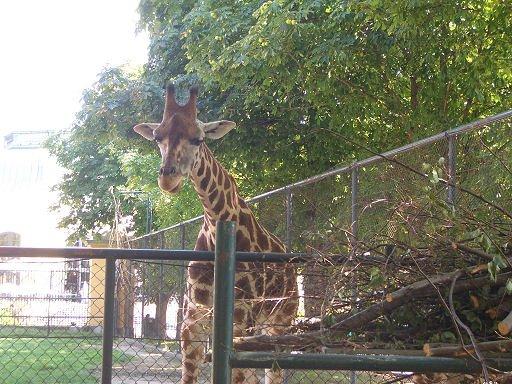 Wiedeń Zoo Tiergarten