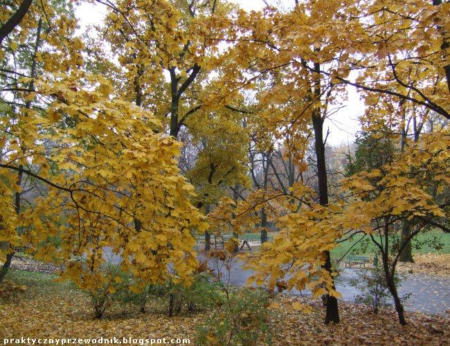 Podgórze Park imienia Wojciecha Bednarskiego