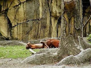 funny animal sex - gambar hewan yang sedang berhubungan seks - munsypedia.blogspot.com