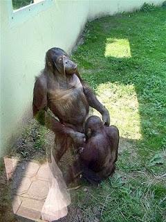 funny animal sex - gambar hewan yang sedang berhubungan seks - gambar-yang.blogspot.com