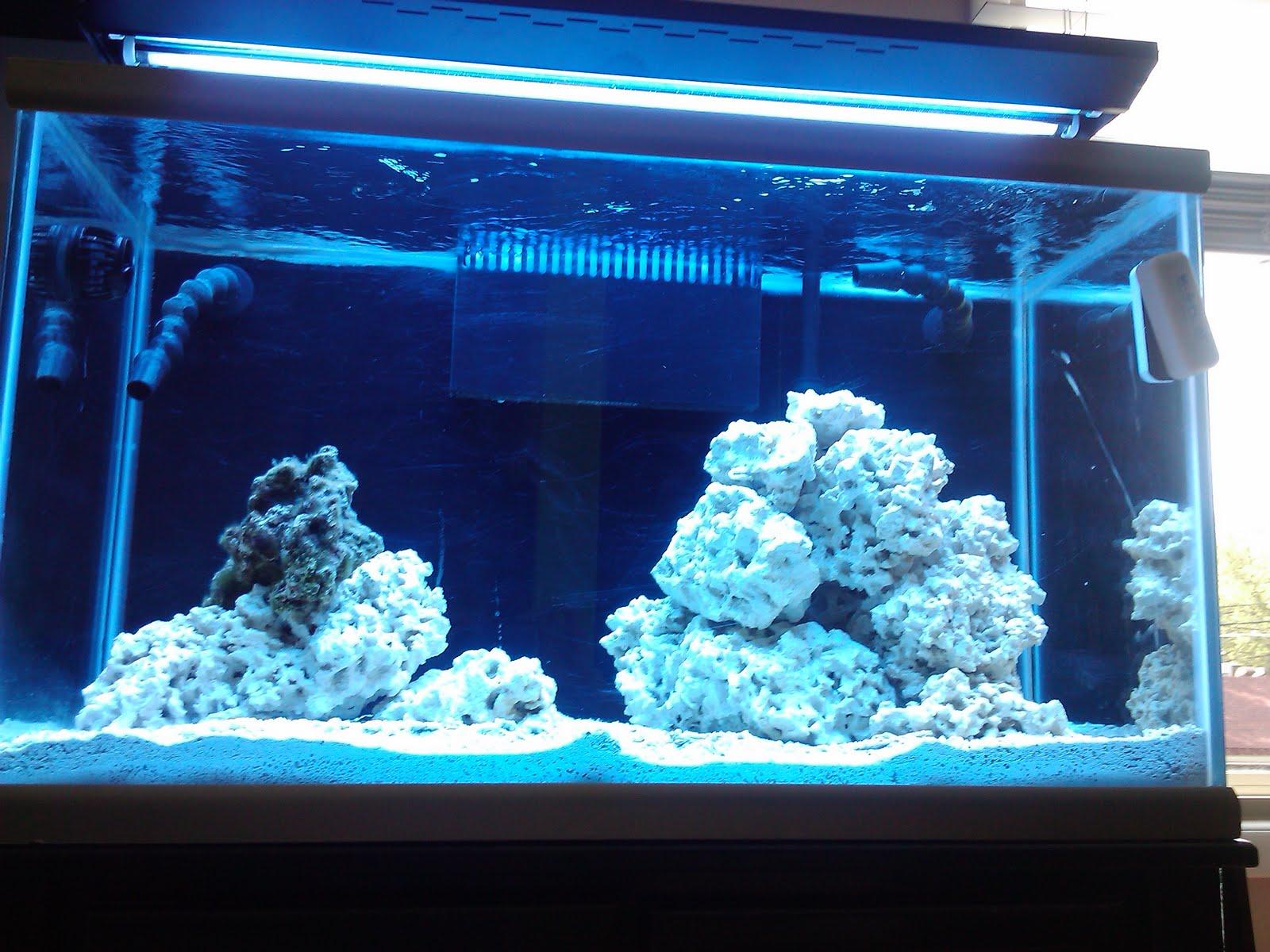 Noel S 58 Gallon Reef Build
