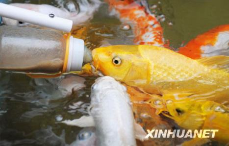 Benih Ikan Ku: Lucu Juga .... Ada Ikan yang hanya mau makan dari ...