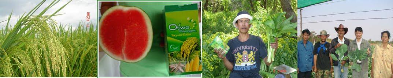 โอทูฟลาโวเจน อาหารเสริมคุณภาพสำหรับพืช จ่ายน้อย ได้ผลดีที่สุด รายได้