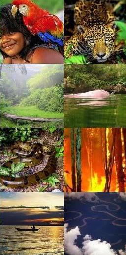 *Preserve a Natureza!*