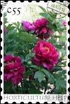गुलाब की खेती
