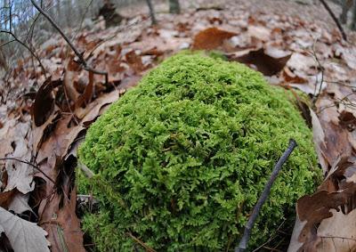 http://2.bp.blogspot.com/_pVVcdosdNyY/STGpdc81QLI/AAAAAAAABvE/sW_qiChpnGI/s400/woods_moss3.jpg