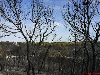 incendio Valmadrid cenizas y verde