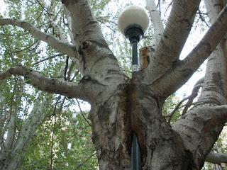 árbol come Farola Parque de la Memoria Zaragoza