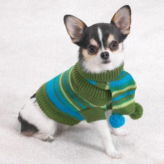 Chihuahua (dog) - Wikipedia, the free encyclopedia