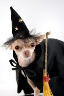 Halloween Chihuahua Clothes