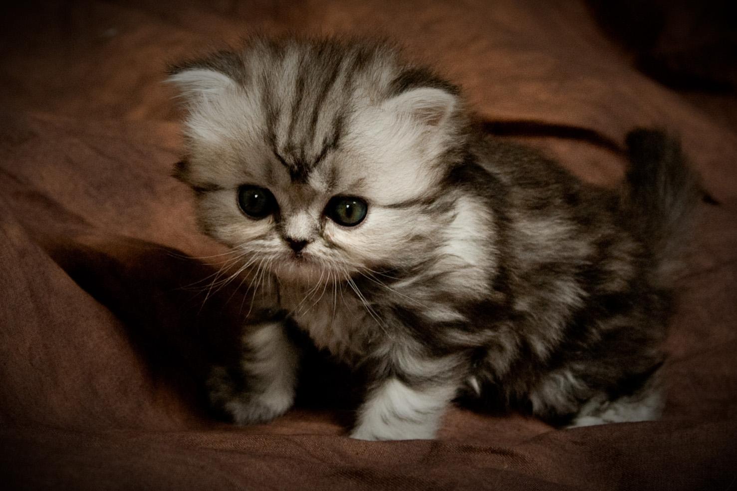 new cat cries at night