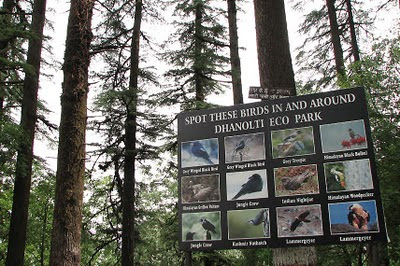 Dhanaulti is a great place for birding. There is a birding trail set up by the forest department with hoardings to help new birders.