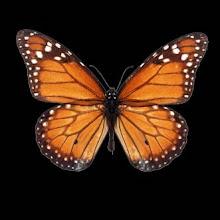 ...są słowa jak motyle: mogą unieść w górę Twoje sny ...