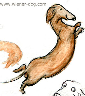 weiner dog sketch by Terry Pond