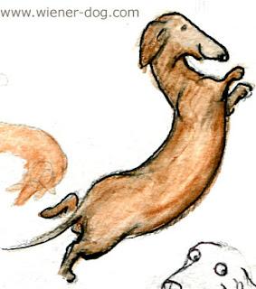 weiner dog sketch by Terry Pond