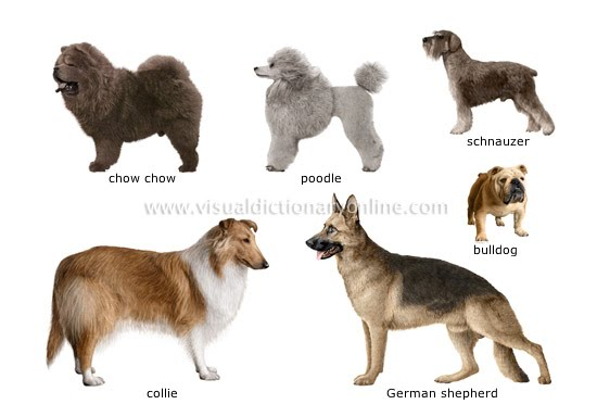 Long Haired Dog Breeds List. dog breeds list