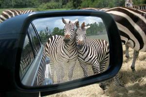 Zebra Ministries