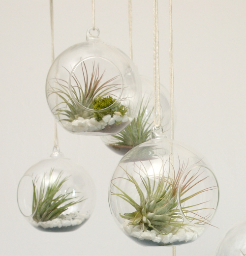 Easily inspired diy vase and air plants for Air plant planters