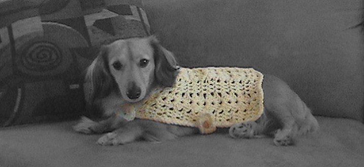 Minature Dachshund Dog Sweater - Knitting and Crochet Start work