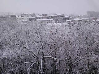 写真: 6日目 昼に撮影した病室の窓から見える光景。雪は朝から降り続いていて、木々や屋根に静かに降り積もっている。