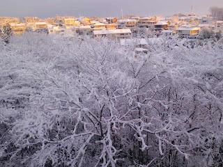 写真: 7日目朝の雪景色 その2