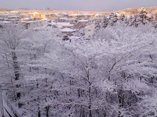 写真: 7日目朝の雪景色 その3