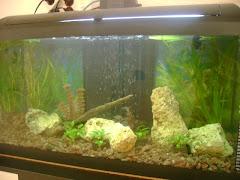 L'aquari del Montserratina