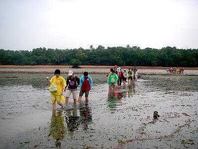 Seagrass lagoon