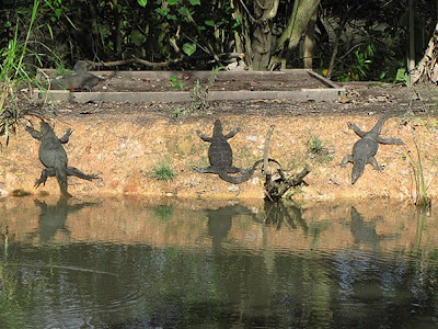 Malayan Water Monitor Lizards (Varanus salvator)
