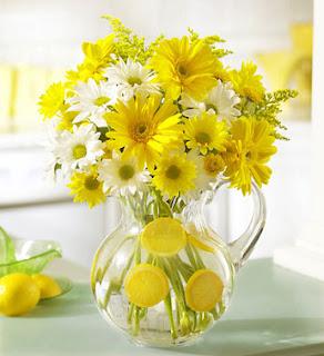 hoa dã quỳ tím