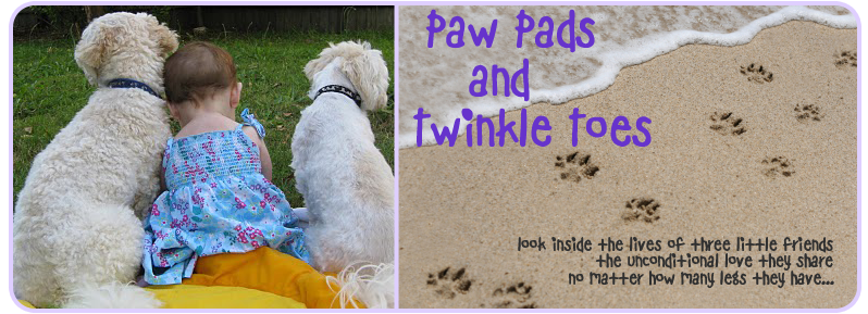 Paw Pads & Twinkle Toes