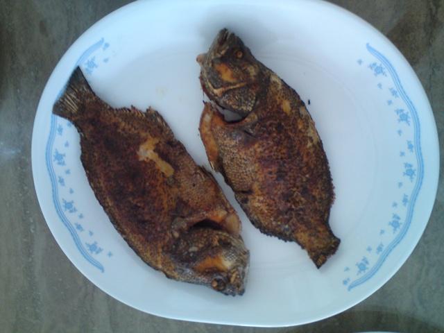The slog reviews veni vidi vici cobia porridge and my for Triple tail fish taste