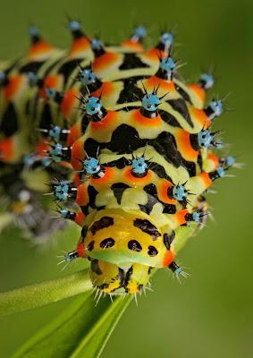 Cuba anda perhatikan serangga di atas berwarna warni dan disertai