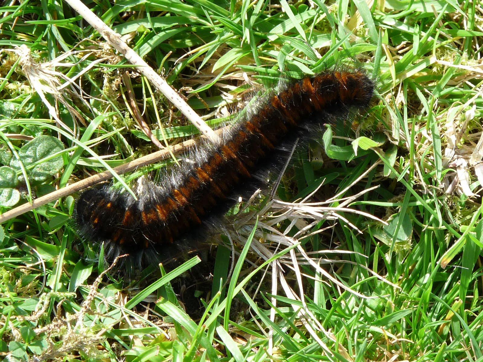 Caterpillar Emerge Black Shoes