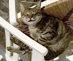 gato griego feliz visto del revés