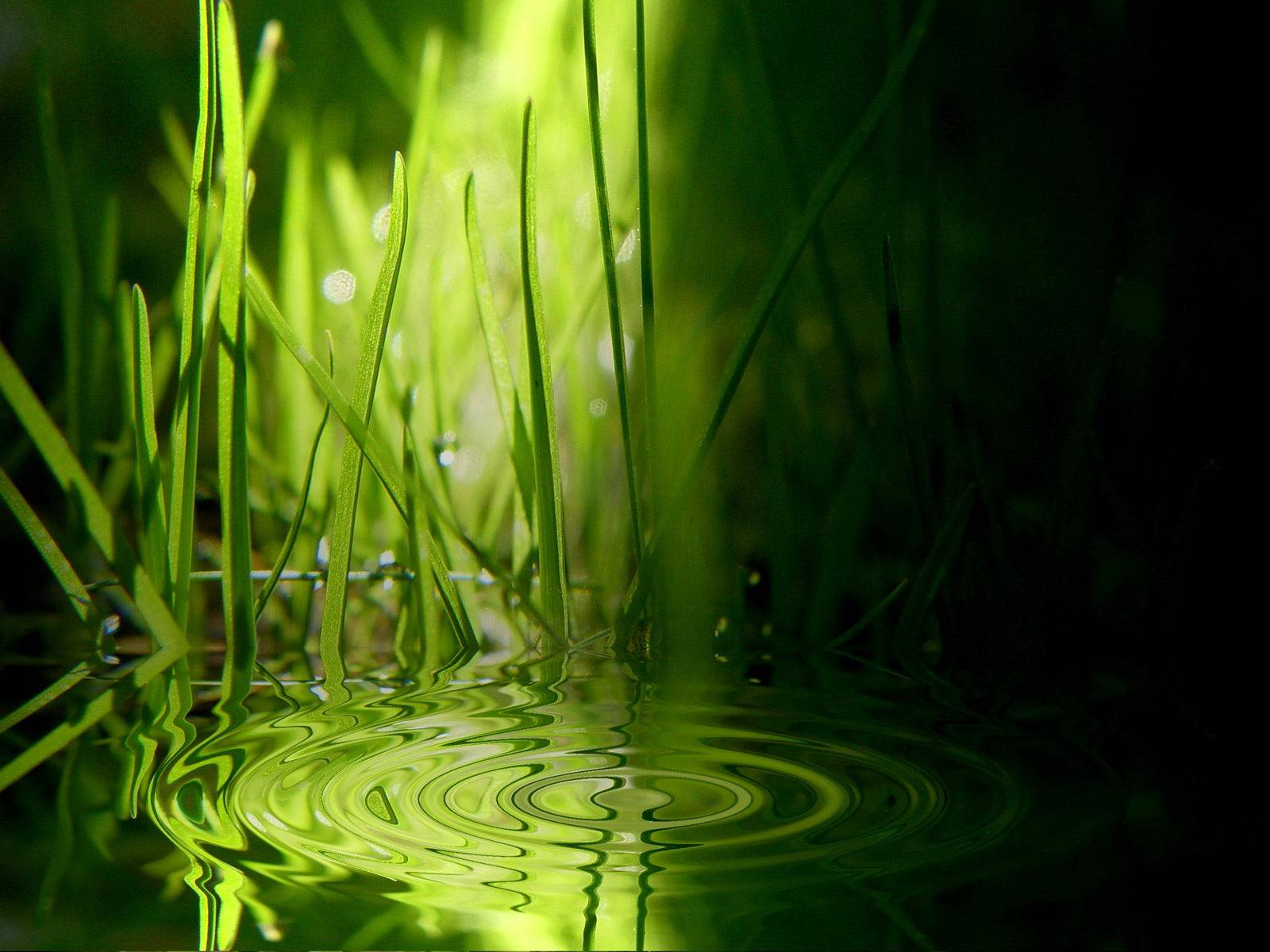 Green and Water Win 7 Wallpaper