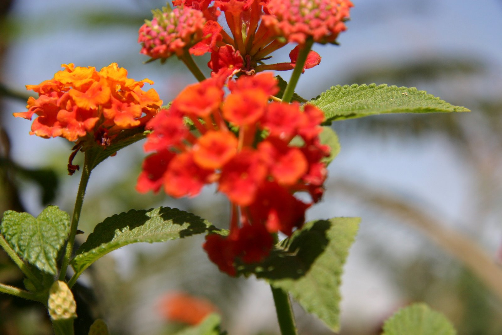 Top 28 Flowers To Plant In March Plants In Egypt