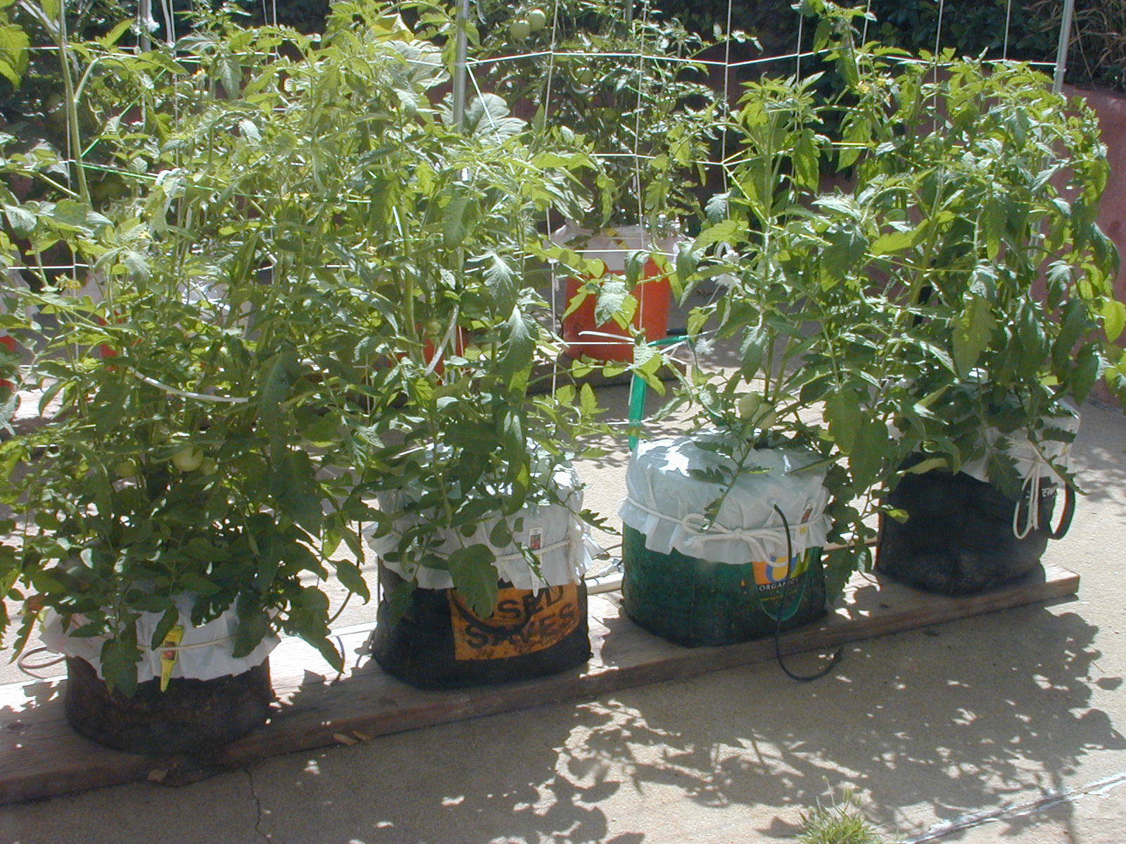 What is the best soil for tomatoes - Global Buckets