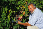 Daniel Faure, vigneron